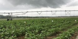Storm clouds over a field with irrigation equipment.
