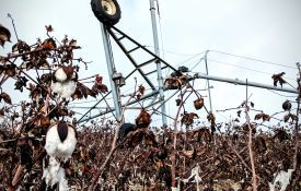 Irrigation equipment damaged in a cotton field from a storm.