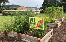 grow more give more community garden