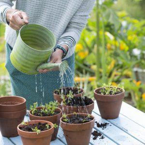 Figure 23. Hand-watering seedlings