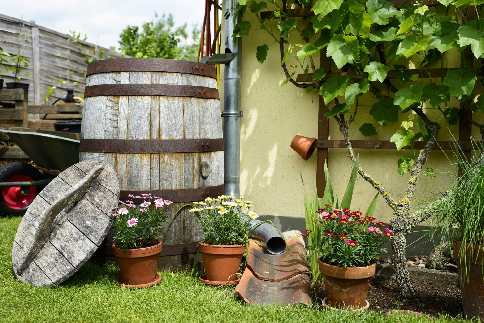 Wooden barrel for rainwater