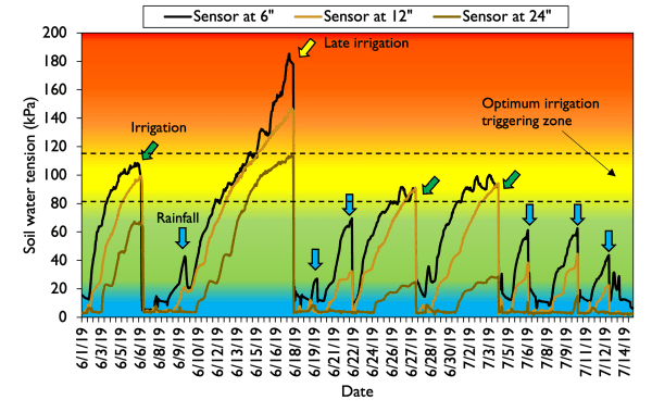 Figure 3. Dynamic soil water tension values over the period of peak water demand for corn (R1 to R5) at soil depths of 6, 12, and 24 inches for a cornfield cultivated on a silty clay loam soil in northwestern Alabama. Irrigation is represented by green arrows and rainfall by blue arrows.