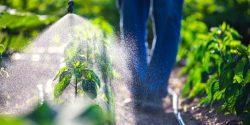 Gardener spraying insecticide on vegetable plants